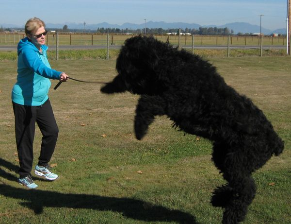 Barb and Myka - Black Russian Terrier