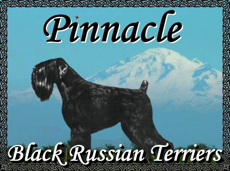Pinnacle Black Russian Terrier - BRT breeder Washington